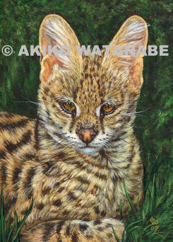 Open Edition Print Of Serval Painting Big Wild Cat