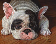 French_Bulldog_small