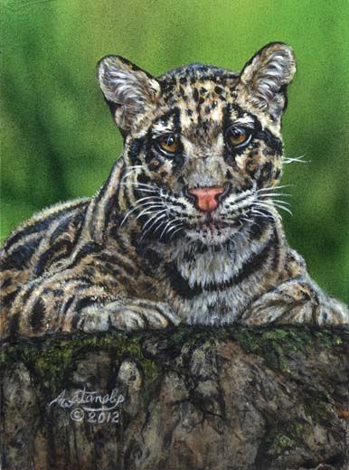 Watching You (clouded leopard)