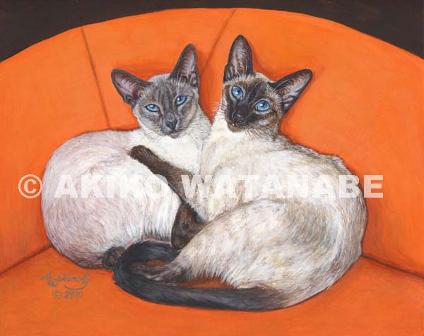 Cozy Couple (Siamese cats sitting together)