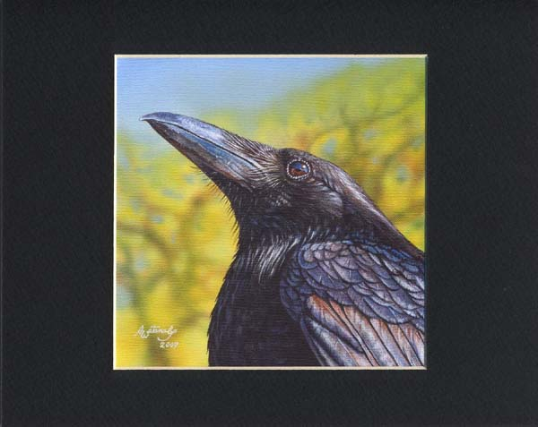 Spring Sky - Matted (crow raven bird)