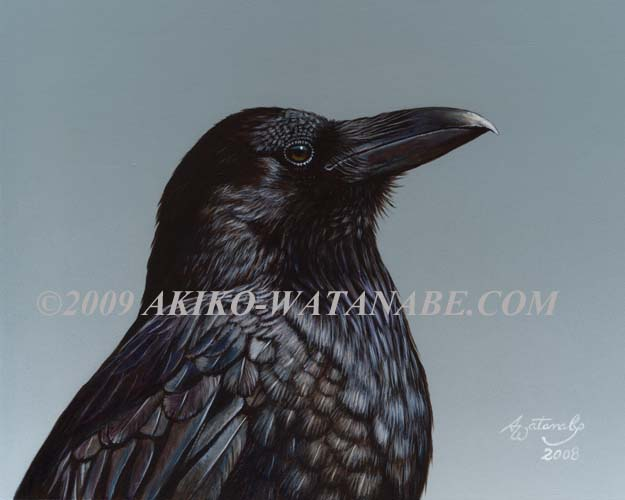 Study of a Raven (crow bird)
