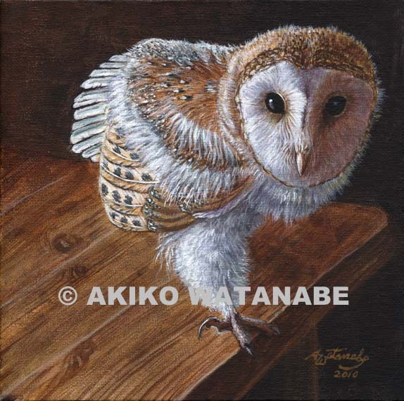 Baby Barn Owl (bird art print)