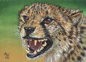 ACEO-Cheetah-10