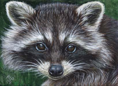 Raccoon  3    Acrylic  Raccoon Acrylic Painting