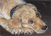 ACEO-Retriever-02